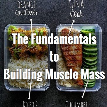 The Fundamentals of Building Muscle Mass